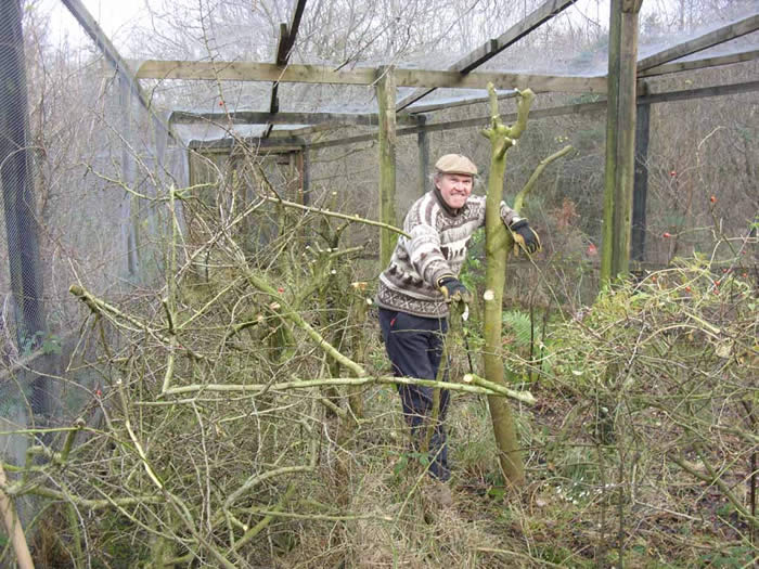 Brian pruning in the Heligoland