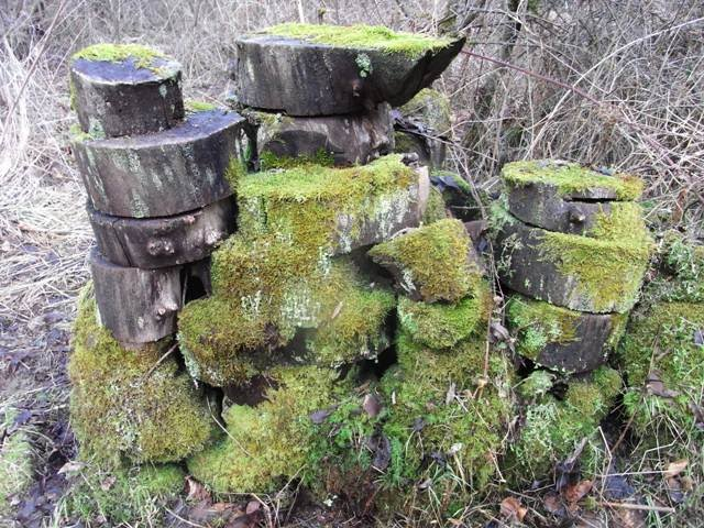 Log pile covered in moss