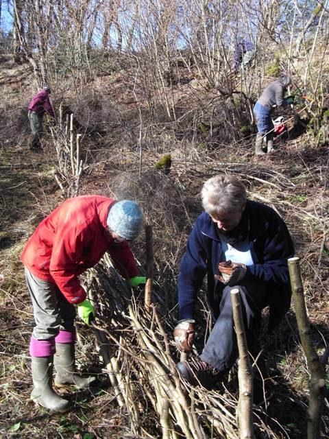 Volunteers working on the dead hedge