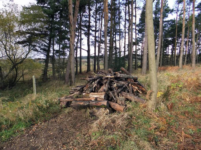 Log pile for minibeasts