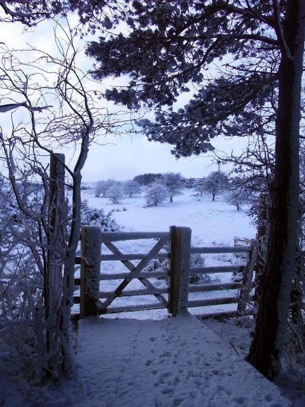 Snowy moor view