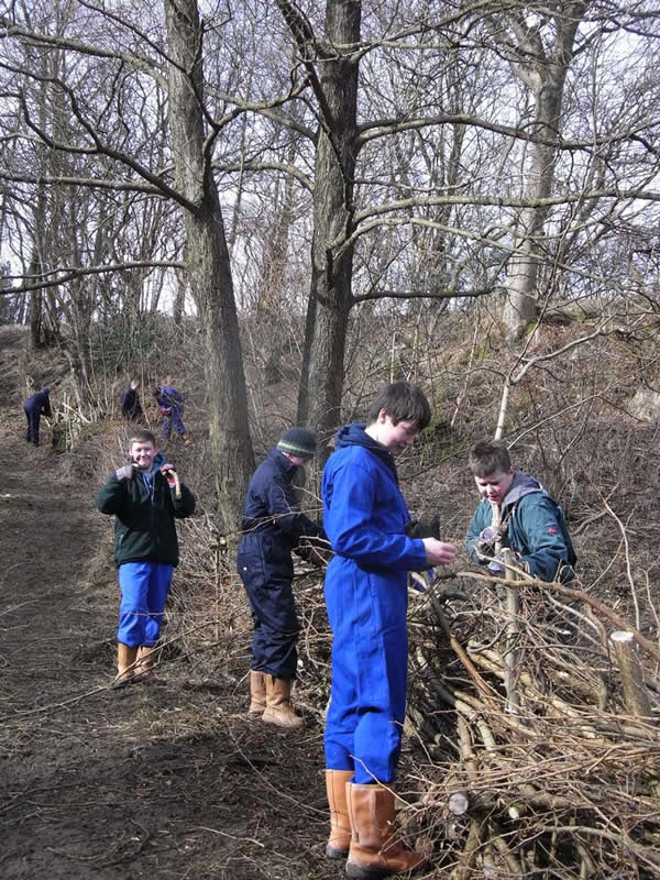 Students from Askham Bryan working on the dead hedge