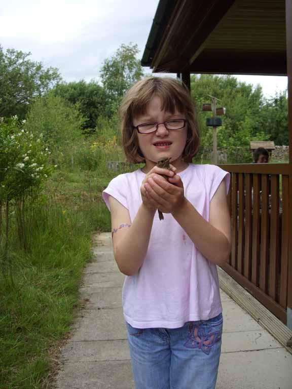Releasing a Goldfinch