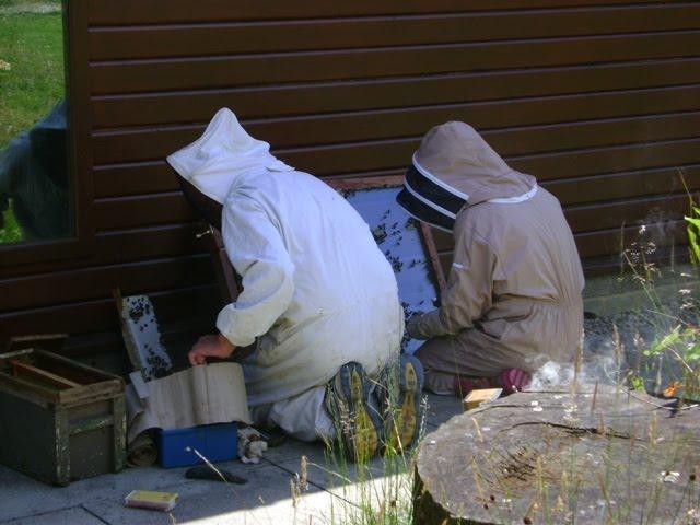 Richmond beekepers