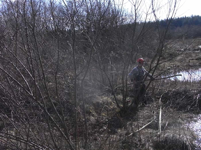 Chris coppicing Willow