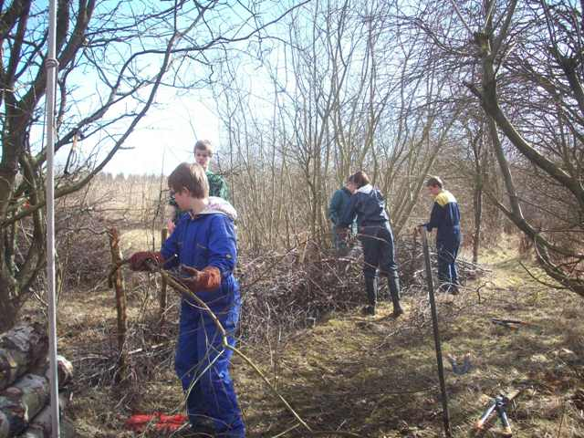 Students building a dead hedge