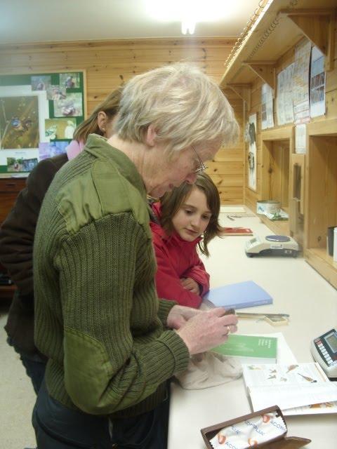 Elizabeth ringing a Reed Buntings