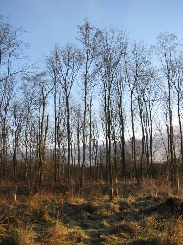 Tree shadows across the moor