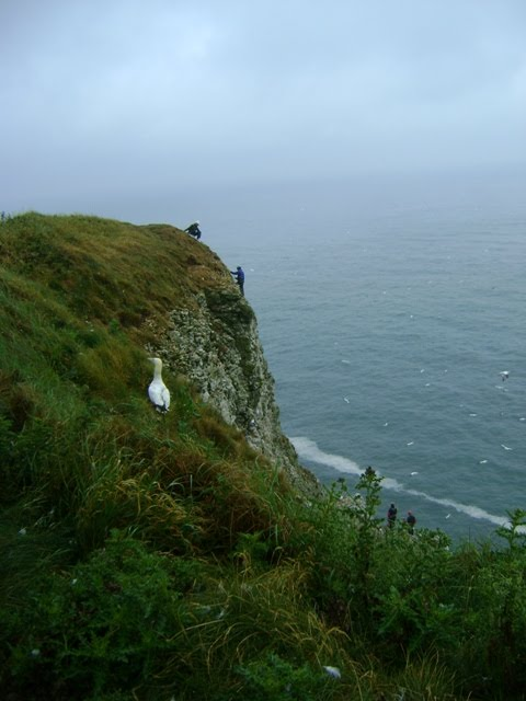 Cliffs in Bempton East Yorkshire