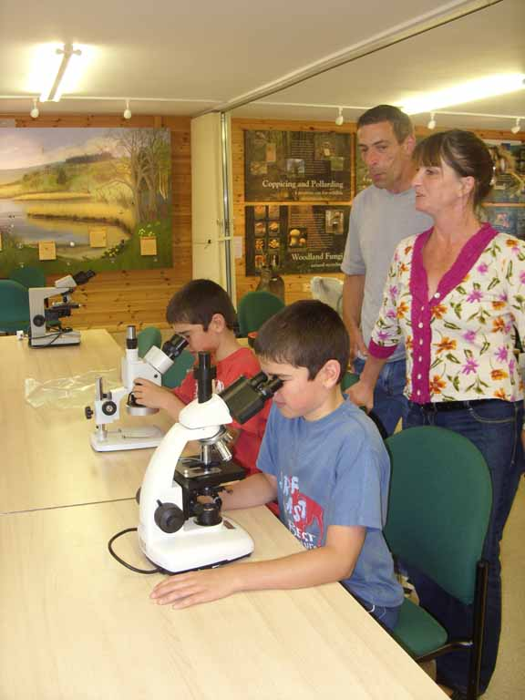 Bee microscopy course
