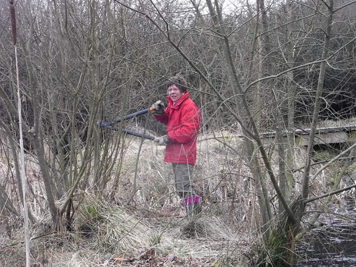 Volunteer clearing woodland
