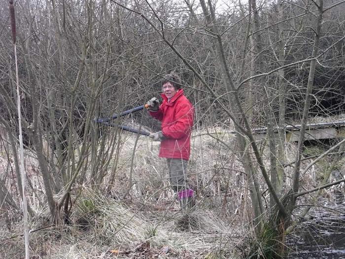 Volunteer clearing woodland
