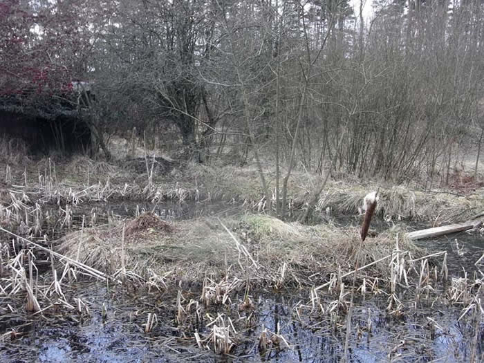 Island in the vole pond