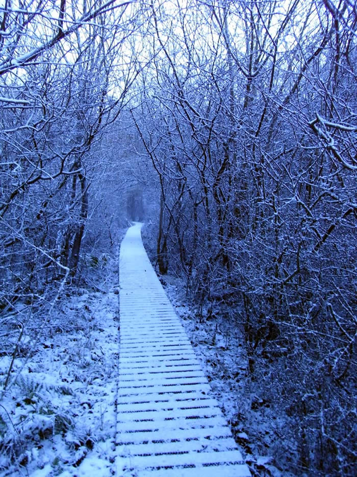 Snow dusted path