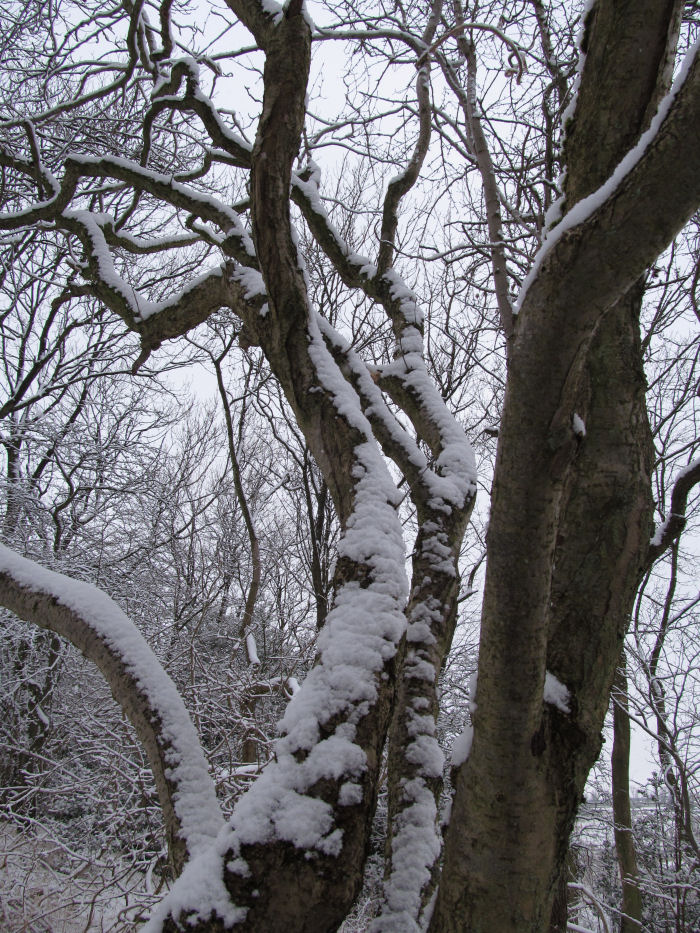 Snow on the Ash
