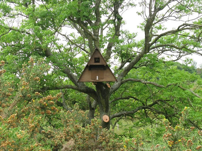 Barn owl nest boxes