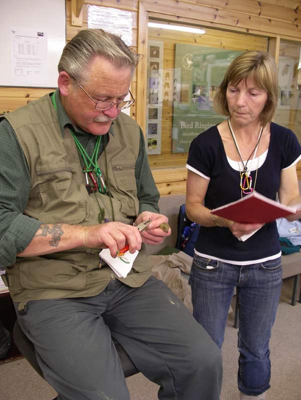 Tony and Lesley checking a Greenfinch.