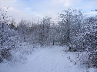 Snowy reserve
