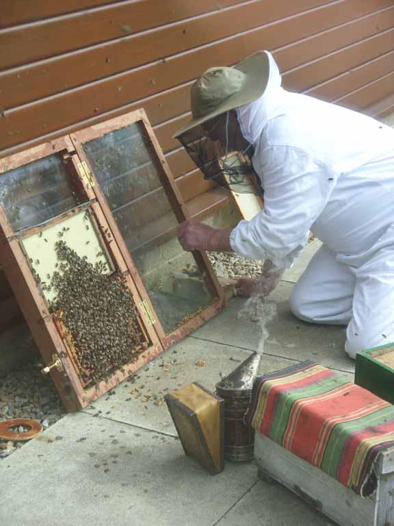 David, the beekeeper