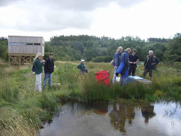 Releasing the water voles