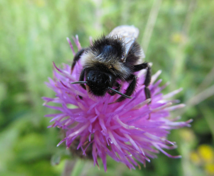 Bee on Hardheads