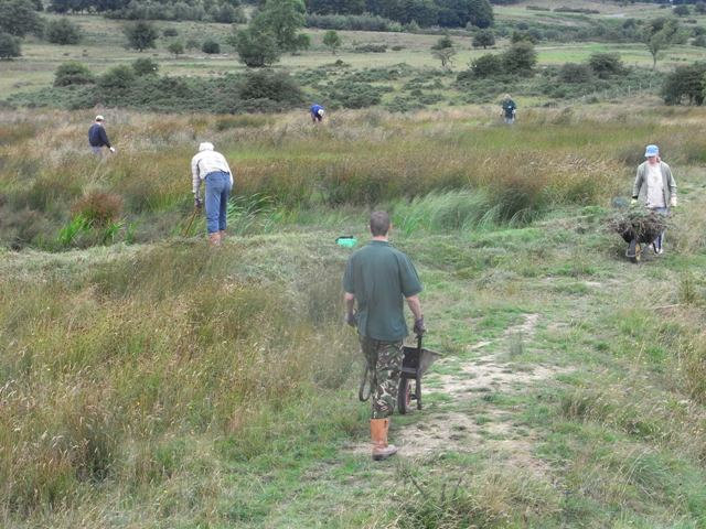 Volunteers clearing thistles and reeds