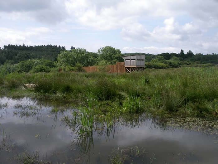 Ponds in front of the hide