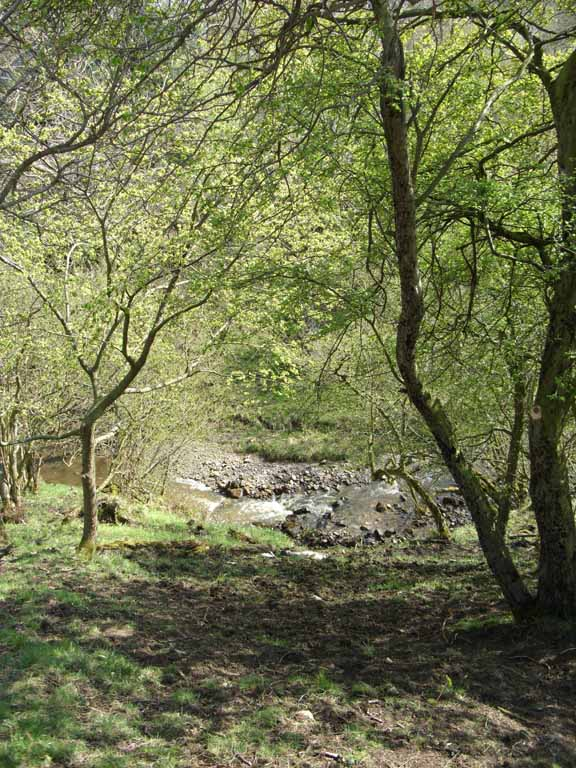 Risedale Beck