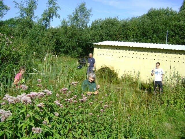 Volunteers working on pond maintenance