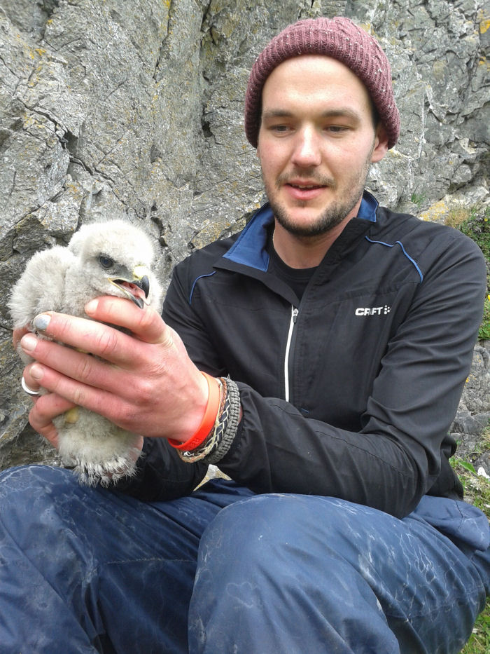 Adam with Buzzard chick
