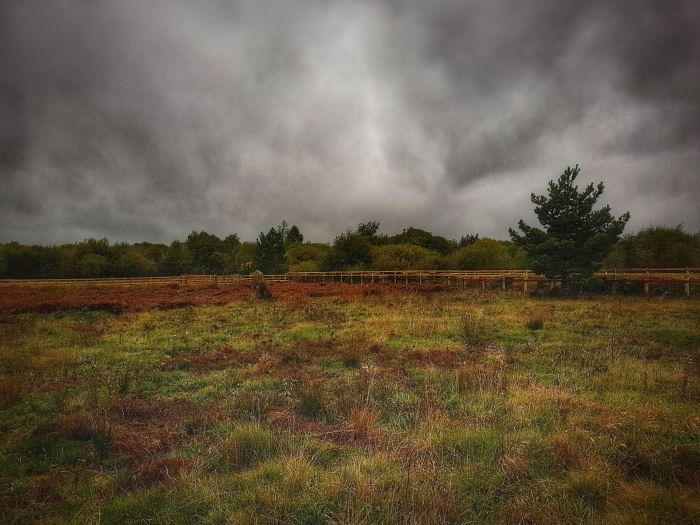 Dark skies over the heath