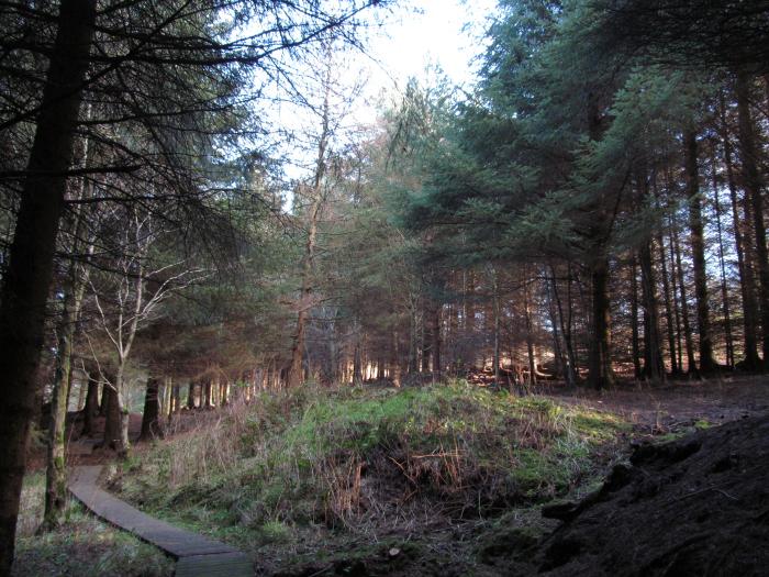 Sun shinning through the trees
