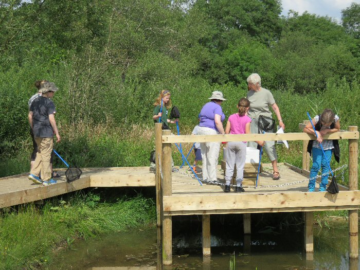 Pond dipping at the new platform
