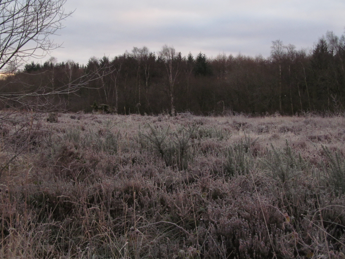 Frost on the heath