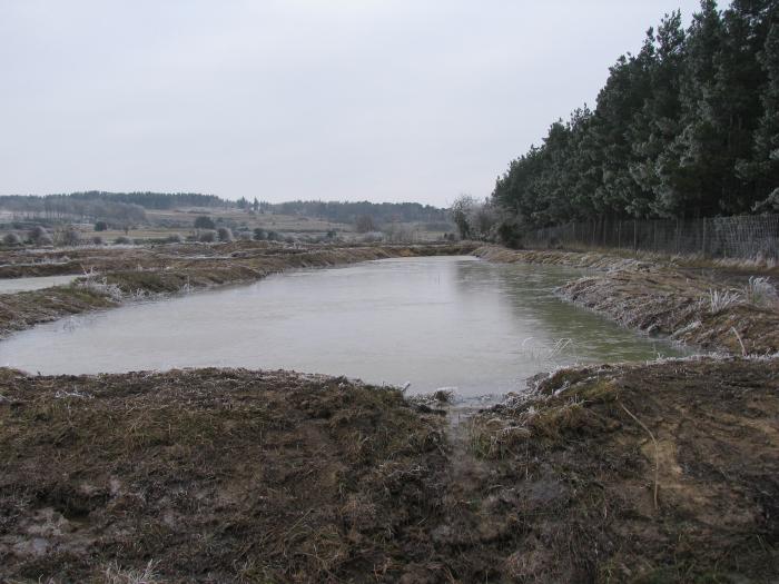 Wetland in January 2009