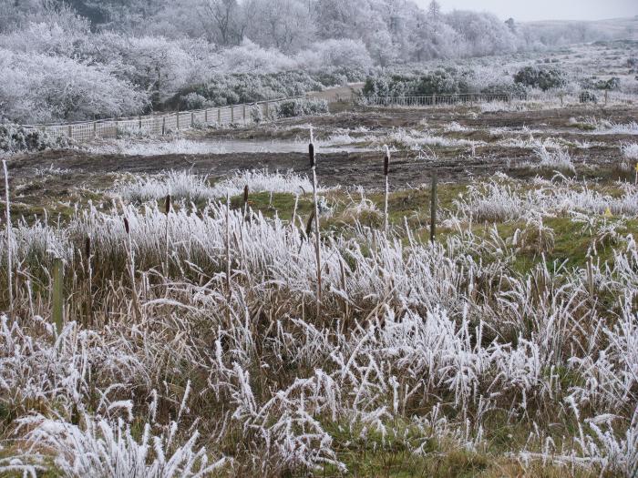 Wetland January 2009