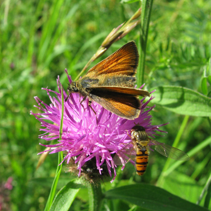 Butterfly and insect on flower