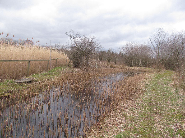 Newly cut reed bed