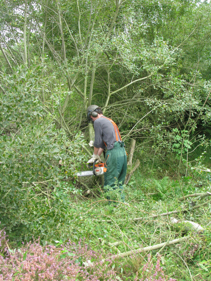 Adam cutting down a willow tree