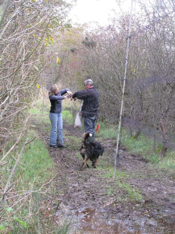 Taking two Kingfishers out of the net