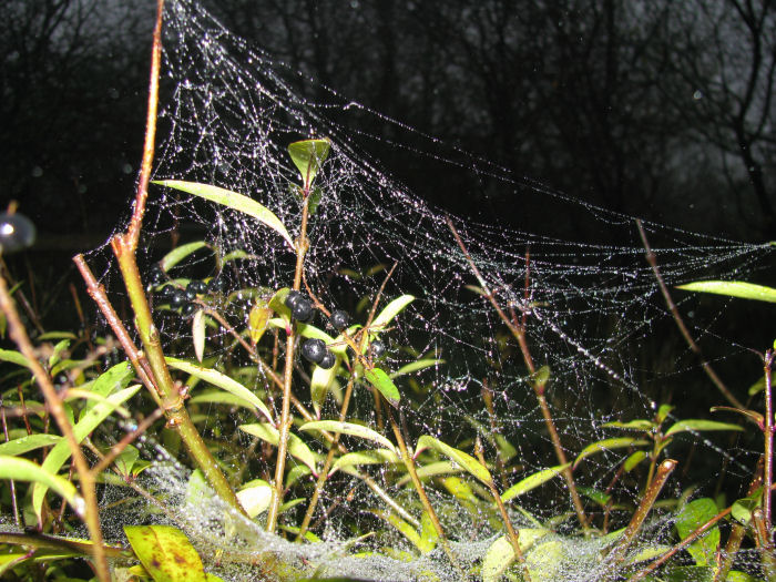 Mist covered spider's web
