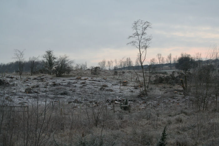 Frost on the reserve