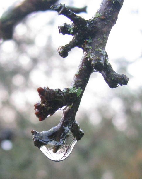 Water droplet on branch