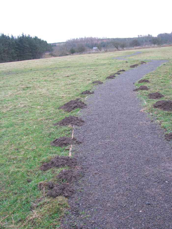 A line of mole hills
