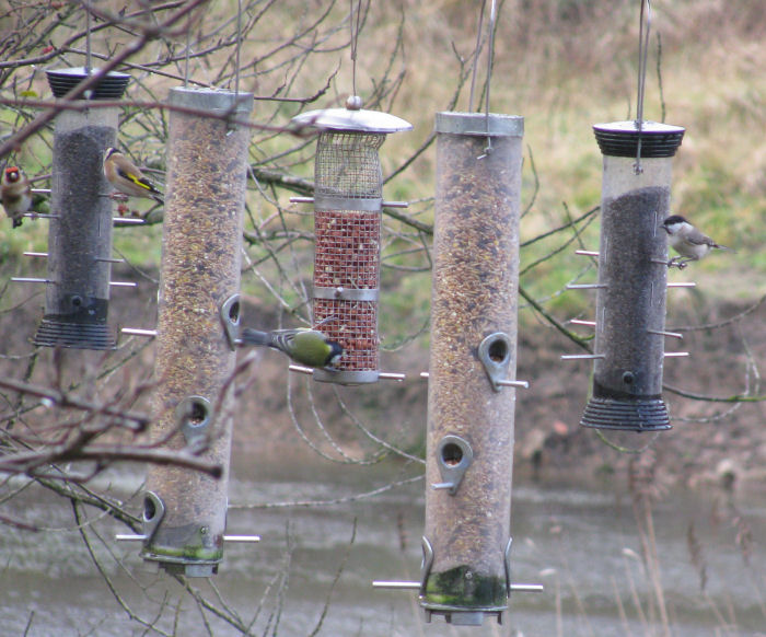 Birds on the lake feeders