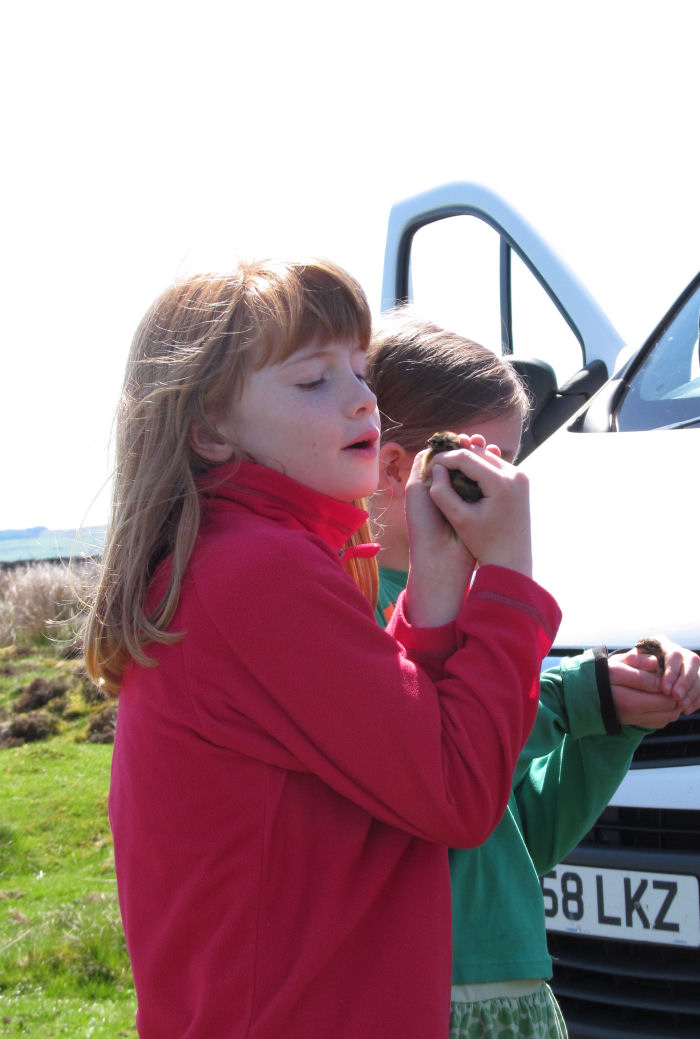 Observing the Red Grouse chicks