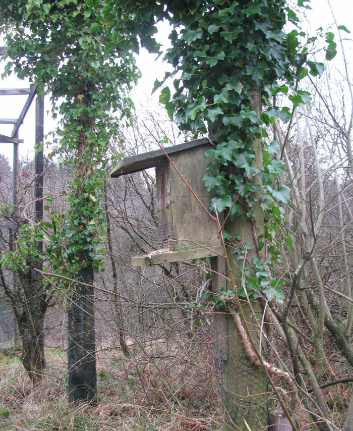 Feeder in Heligoland trap