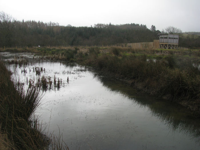 Dreary wetland  in damp weather