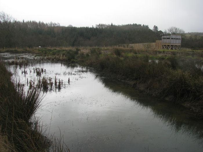 Dreary wetland  in damp weather