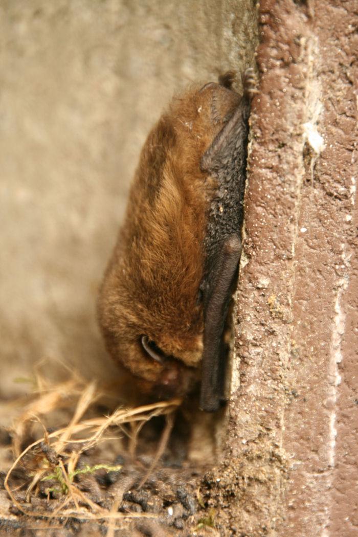 Bat in a bird box